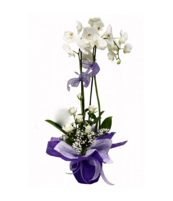 mc407beyaz orkide beyaz güller